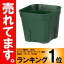 【北海道配送不可】【1200個】 90型 モスグリーン プレステラ ポット 鉢 おしゃれ 日本ポリ鉢販売 タ種 【代引不可】