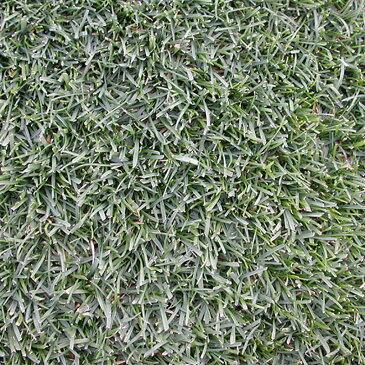 【種 10kg】 ケンタッキーブルーグラス 普通種 緑化用 緑肥 [播種期:4〜10月] 雪印種苗 米S【代引不可】