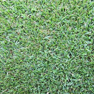 【種 3kg】 ケンタッキーブルーグラス ラトー 緑化用 芝生用 緑肥 [播種期:4〜10月] 雪印種苗 米S【代引不可】