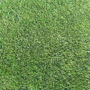 【種 3kg】 ケンタッキーブルーグラス ビーウィッチ 緑化用 芝生用 緑肥 [播種期:3〜10月] 雪印種苗 米S【代引不可】