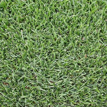 【種 3kg】 ケンタッキーブルーグラス エクスカージョン 緑化用 芝生用 緑肥 [播種期:3〜10月] 雪印種苗 米S【代引不可】