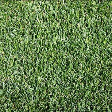 【種 3kg】 ケンタッキーブルーグラス ヌーブループラス 緑化用 芝生用 緑肥 [播種期:4〜10月] 雪印種苗 米S【代引不可】