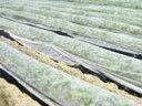 イワタニ NEWアイホッカ (高保温性 農業用不織布 ) - 2.1×200m