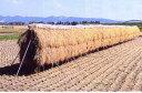 稲干台 はざ 4段掛け 鉄製  稲架(はさ、はざ、はせ、はぜ、はで)掛け シNZ