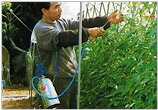 ヤマト農磁 ホルモン噴霧器 プレッシャー式 2L...の商品画像