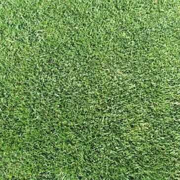 【種 3kg】 ケンタッキーブルーグラス ビーウィッチ 緑化用 芝生用 緑肥 [播種期:3〜10月] 雪印種苗 米S【送料無料】 【代引不可】