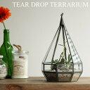 """ショーケース ディスプレイケース 【あす楽14時まで】ティアドロップ テラリウム Sサイズ Tear Drop Terrarium """"S"""" 植物 ガラス グリー.."""