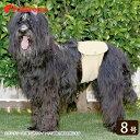 中・大型犬用 マナー兼用 ラジウム健康ベルト 8号