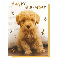 Music card birthday celebration poodle