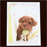 Comment post card poodle poodle / gadgets / card / greeting card and stationery / toy / dogs / dog