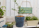 【オリーブMとドゥーアローサークルSBLの鉢植え】オリーブ 鉢 ガーデニング ベランダ ジャンクガーデン 鉢植え オリーブ鉢植え かわいい ネバティロブランコ ルッカ マンザニロ おしゃれ オリーブの鉢
