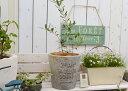 【オリーブMとドゥーアローサークルSGの鉢植え】オリーブ 鉢 ガーデニング ベランダ ジャンクガーデン 鉢植え オリーブ鉢植え かわいい ネバティロブランコ ルッカ マンザニロ おしゃれ オリーブの鉢