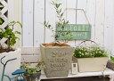 【オリーブMとドゥーアロースクエアSGの鉢植え】オリーブ 鉢 ガーデニング ベランダ ジャンクガーデン 鉢植え オリーブ鉢植え かわいい ネバティロブランコ ルッカ マンザニロ おしゃれ オリーブの鉢