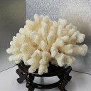 白珊瑚 置物|珊瑚 fossil Coral サンゴ コーラル さんご 化石 フォシル【置物 白珊瑚 インテリア 癒し】メンズ Men 039 s レディース Ladies 天然石 海外直輸入価格 白珊瑚