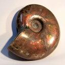 アンモナイト 化石 Ammonite アンモライト レインボー アンモン貝 菊石 fossil アンモナイト 原石 置物 生きた化石 fossil 石 鉱石 Stone 古生物 標本 メンズ レディース 一点物 パワーストーン アンモナイト