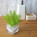 ミリオン ウォーターキューブ 人工観葉植物 フェイクグリーン 造花 GREENPARK