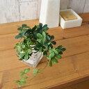 シュガーバイン ウォーターキューブ 人工観葉植物 フェイクグリーン 造花 GREENPARK
