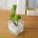アオエニウム ウォーターキューブ 人工観葉植物 フェイクグリーン 造花 GREENPARK