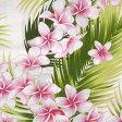 ハワイアンファブリック/綿100%【ゆうパケットで、送料160円】【50cm単位】【プルメリア/ホワイト】(ハワイアン 生地/生地 ハワイ/ハワイアン ファブリック/ハワイ 雑貨/ハワイアン雑貨/カットクロス/ハワイアンキルト/入学準備)