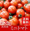 【送料無料】高知産・四国産ミニトマト プチトマト約3kg10P01Mar15高知トマトサミット05P03Sep16