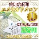 高知夜須町産・エメラルドメロン1玉入り化粧箱1.5kg、ご贈答に 【RCP】05P18Jun16