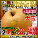 【送料無料】高知針木・黒岩産・新高梨2玉入り・約2kg贈答和...