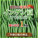 高知産インゲン豆約1kg スジナシ 丸サヤインゲン送料別商品