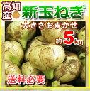 【送料別】高知産・新玉ねぎ新たまねぎ約5kg・
