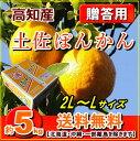 【送料無料】高知産ぽんかん贈答用5kg化粧箱2L〜Lサイズ【RCP】P20Feb16