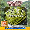 【送料無料】高知産ゆでイタドリ約2kg北海道1000円・沖縄1500円送料ご負担頂きます。