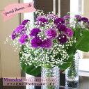 【送料無料】敬老の日 カーネーション 紫 青 カーネーション  ムーンダスト プレゼント 花瓶つき
