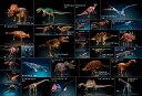 【あす楽】恐竜 150ピース ジグソーパズル 恐竜ミュージアム ラージピース(26×38cm) (L74-169) ビバリー 【梱60cm】t103