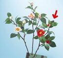 《 造花 》◆とりよせ品◆Parer 八重椿 レッド 和 ツバキ カメリア