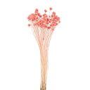 《 ドライフラワー 》★即日出荷★大地/オオチノウエン(ソクジツ) ミニコーンフラワー ピンク ハーバリウム