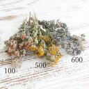 《 ドライフラワー 》大地農園/オオチノウエン 【カタログ外】ロータスブリムストーン・花付ハーバリウム