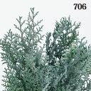 《 プリザーブドフラワー 》大地農園/オオチノウエン ソフトヒノキ フロッキーグリーンハーバリウム