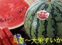 【鳥取の旬のフルーツ「夏」】西瓜の本場!大栄すいか11kg以上の特大玉1玉産地箱...