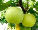 【鳥取の旬のフルーツ「初秋」】新品種の梨!なつひめ5kg箱8月下旬より順次発送予定【旬の果物・フルーツ・くだもの】【なし 取り寄せ】【梨 取り寄せ】