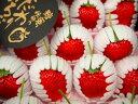 【送料無料】熊本の旬の果物きくちのまんま【ひのしずく】【こだわりいちご】糖蜜使用の甘い苺1月中旬ごろから順次発送予定【同梱・日時指定不可】