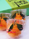 【贈り物に最適!】 【広島の旬のフルーツ「春」】木成り完熟デコポン3kg箱大玉(7?12玉入)光セン