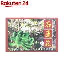 石蓮花茶 2.8g×30袋【楽天24】[中村カイロ協会 石蓮花茶(セキレンカ茶) お茶]