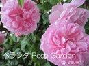 �٥��� Rose Garden