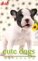 cute dogs21 �ե����֥�ɥå�