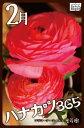 ハナカツ365 [2月]【電子書籍】[ 渡芳樹 ]