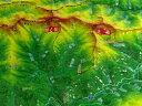 ジオラマ地図 北岳・間ノ岳