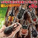 【5体セット ビッグ 甲虫 セット フィギュア 】昆虫 ヘラ...