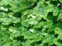 グリーンフェンス 1×3m 日よけ 省エネ 壁面緑化 緑のカーテン 目隠し m ガーデンフェンス トレリス ラティス(代引不可)【送料無料】