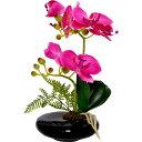 卓上型胡蝶蘭 奏(かなで) ピンク 永光