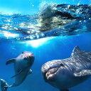 絵画風 壁紙ポスター (はがせるシール式) イルカの親子と波のコラボレーション バンドウイルカ ドルフィン 海 キャラクロ DLP-012S1 ..