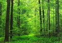 【当店TOP3!】絵画風 壁紙ポスター (はがせるシール式)森林 森林浴 緑 目の保養 気分転換 癒し キャラクロ SNR-001A1 (A1版 830mm×585mm) 建築用壁紙+耐候性塗料 インテリア